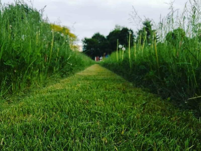 May 28, 2020 Grass